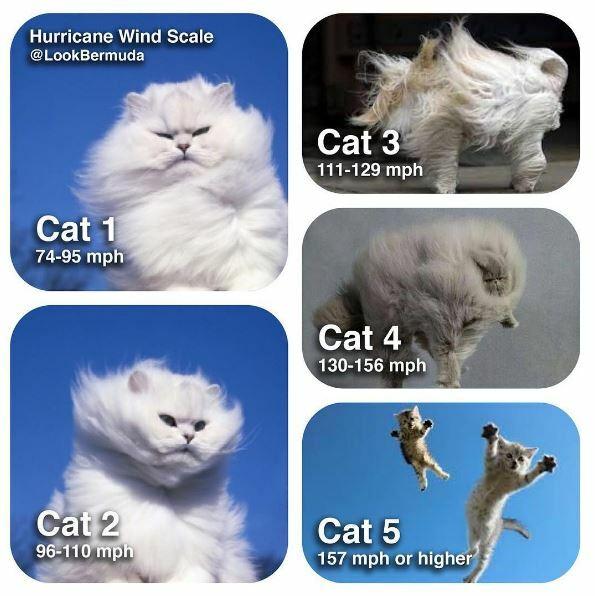 Name:  hurricane_cats.jpg Views: 140 Size:  54.3 KB