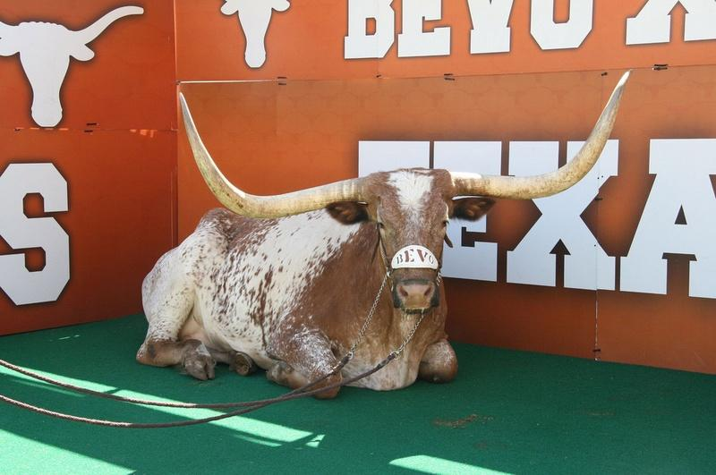 Name:  Bevo-UT_jpg_800x1000_q100.jpeg